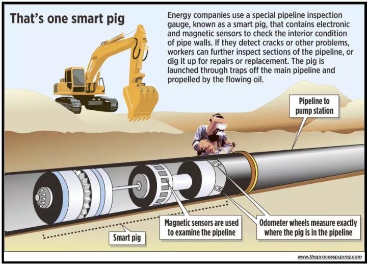 smart-pig
